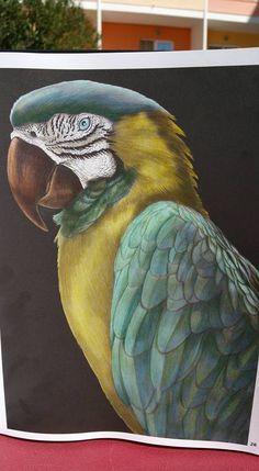Macaw 2 (page 28) by Caroline W.