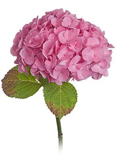 32 Best Pink Silk Hydrangea Images Beautiful Flowers Hydrangeas