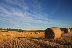 South Downs Straw Bales