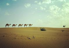 "166 mentions J'aime, 5 commentaires - Niya Photo 🌍📷 (@niyam1) sur Instagram: ""#dubaï #desert #kamel #travel #photo"""