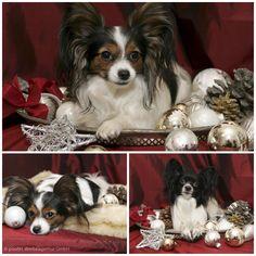 """Unsere Gute Laune Manager """"Blitz und Pimpi"""" wünschen allen frohe Weihnachten und einen guten Start ins Neue Jahr 2016:)  #froheweihnachten #merrychristmas #happynewyear"""