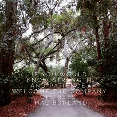 If you would know strength and patience, welcome the company of trees. ~ Hal Borland #quote #wisdom #nature #astrology