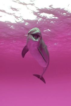 Imagen de dolphin, pink, and animal