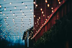 perfect way to set up lights for your backyard wedding, this is one of the most important elements of your event, your lighting, and don't forget your indirect lighting also, using lamps, lanterns, candles, etc... even using mason jars for candles just go all out.