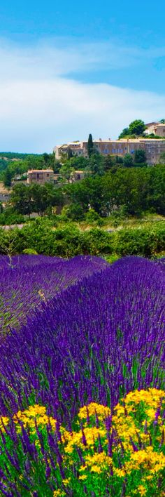 Lavender Fields by Banon - Provence | France #LavenderFields