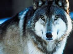 What Spirit Animal Are You? I got a wolf... @Rachel PLEASE TAKE THIS QUIZ. The results are hilarious.