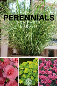 Ready To Start Gardening? Celebrate Spring With All New Perennials.