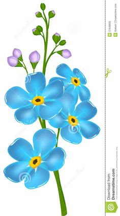Illustration With Forget-me-not Flower Royalty Free Stock Photo ...