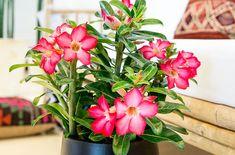 De tio bästa blommande krukväxterna för nybörjare | Wexthuset Plants, Garden
