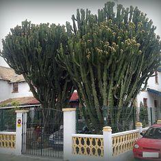 En el barrio Obrero de Huelva