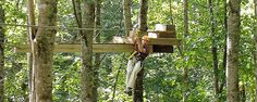 American Zipline Tours/ I have always wanted to do this!    Plumtree, NC