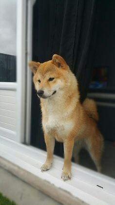 Hello Hyuka -