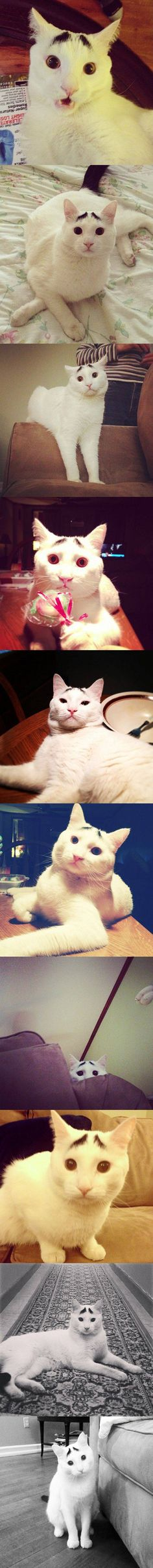 Here are 10 pictures of Sam, the famous cat with real eyebrows.