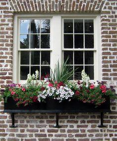 snapdragon, petunia, fern, verbena, and geranium window box | ... geranium, purple verbena, crimson 'Ballet' geraniums, rose-red