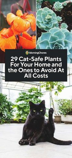 29 Cat-Safe Plants For Your Home and the Ones to Avoid at Al.- 29 Cat-Safe Plants For Your Home and the Ones to Avoid at All Costs - Cat Safe House Plants, Houseplants Safe For Cats, Cat Plants, House Plants Decor, Safe Plants For Cats, Garden Plants, Best Indoor Plants, Outdoor Plants, Outdoor Gardens
