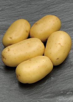 Low Carb - Carrera Seed Potato  Solanum tuberosum ... I need to get my hands on some of these...    'Love potatoes but watching your weight? This is a selection that is low in in dry matter, 14.4%. Most dry matter (approx 82%) is carbohydrate, so the lower the dry matter the lower the carbs. Carrera has white skin and cream flesh, ideal for salads & mashing. It matures early and stores well. Packd under license from VICSPA. PBR. The average frying potato like Russet Burbank has a dry matter…