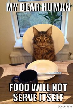 Most funny animal memes and humor pics | Quotes and Humor