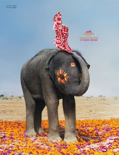 hermes orange and indian pink advertising campaign Hermes Orange, Elephant Love, Elephant Stuff, Elephant Theme, Elephant Art, Gentle Giant, Illustrations, Animal Kingdom, Namaste
