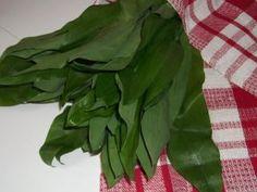 Milyen növény látható a képen?  Most van a szezonja és legtöbben nyersen f ogyasztják.   Találkozhatunk olyanokkal, akik pogácsába vagy kenyérbe hasz nálják fel.  Ez a növény a medvehagyma. Medvehagymás lepénykenyér Hozzávalók: 50 dkg teljes... Spinach, Vegetables, Food, Meal, Essen, Vegetable Recipes, Hoods, Meals, Eten