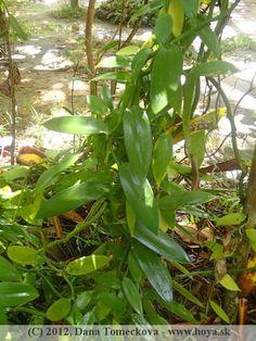 herbs Herbs, Stuffed Peppers, Vegetables, Plants, Stuffed Pepper, Herb, Vegetable Recipes, Plant, Stuffed Sweet Peppers