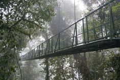 Monteverde Cloud Forest picture in Costa Rica