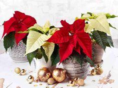 Joulutähti Christmas Wreaths, Holiday Decor, Home Decor, Decoration Home, Room Decor, Advent Wreaths, Interior Decorating