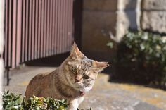 cats_2013-01-27_9 by yousukezan, via Flickr