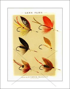 Vintage Fly Fishing Prints for Sale       Patriarch of the Orvis fishing empire. C.F. Orvis opened a tackle shop in 1856 in Manchester Vermont. C.F. Orvis was one of the first to operate a fly fishing tackle production business. C.F. Orvis offered some 434+ fly patterns to the public. In 1890 Orvis superfine flies were selling for $1.50 per dozen. The business he founded still continues today in his name.  In 1883 Orvis publish his fist book , Fishing wtih the Fly, and we are proud to offer…