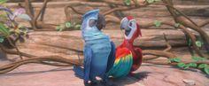 Film Rio, Rio Movie, Computer Animation, Animation Film, Blue Sky Studios, Comedy Films, 3rd Baby, Dreamworks, Parrot