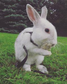 Bunny wash