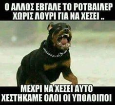 Funny Greek Quotes, Greek Memes, Funny Picture Quotes, Cute Quotes, Funny Photos, Teen Posters, Quote Posters, Funny Cat Memes, Funny Texts