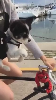 Super Cute Puppies, Cute Baby Dogs, Cute Funny Dogs, Cute Little Puppies, Super Cute Animals, Cute Dogs And Puppies, Cute Funny Animals, Cute Baby Animals, Cute Cats