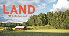 Gå ut på grönbete! Sju vilda gröna blad du kan ha i salladen | LAND.se