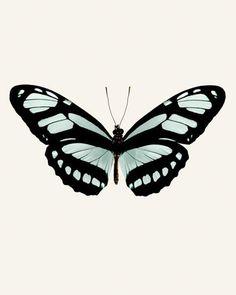 Bamboo Page Butterfly Photo - fine art print by Allison Trentelman | rockytopstudio.com