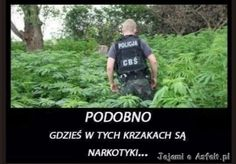 Marihunen Polish Memes, Weekend Humor, Funny Mems, Quality Memes, Wtf Funny, Reaction Pictures, Best Memes, Funny Images, Kuroko