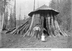 Cedar tree stump hut used as the Post Office in Elwha, Washington. ca 1900