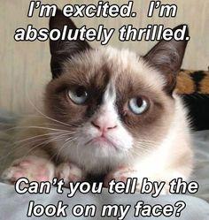 Grumpy Cat IM EXCITED - Best funny, pics, humor, jokes, hilarious, quotes  ---- Grumpy cat, grumpy cat meme, grumpy cat humor, grumpy cat quotes, grumpy cat funny