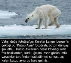 Neşe'nin gözdeleri Humanity Quotes, Crazy People, Pets, Polar Bear, Karma, Did You Know, Evolution, Creepy, Lol