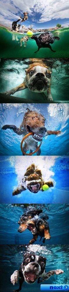 Des chiens qui aiment nager...