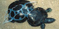 petizione: Tell UK supermarkets to ditch throwaway plastic