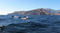 Marquesas | French Polynesia | Dolphins |  Hawaii | Circumnavigation | Sailing