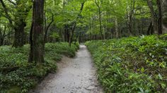 https://flic.kr/p/G9cq1L | Start of the forrest trail in Kamikochi valley | The Kamikochi valley