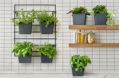 Grow an herb garden close to cooking spaces, while keeping your counter clear for kitchen prep! The MODliv vertical garden system includes a wall-mounted rack, and mix-and-match planters which clip into the rack, can be removed or re-arranged as needed! Planters and rack sold separately, so that you can customize your vertical garden to meet your needs! Modern Planting, Vertical Planting, Vertical Succulent Gardens, Hanging Succulents, Succulents Garden, Vertical Garden Systems, Growing Herbs, Tropical Plants, Herb Garden