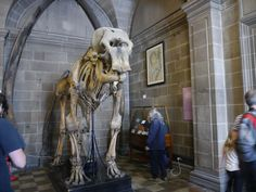Anatomical Museum - free things to do in Edinburgh