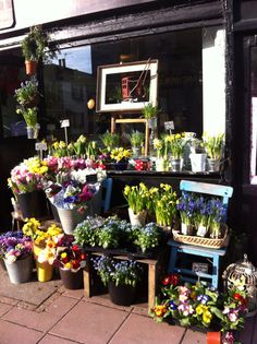 Brighton flowers