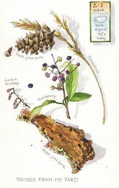 Sketching in Nature: My curiosity cabinet ~ Elizabeth Smith