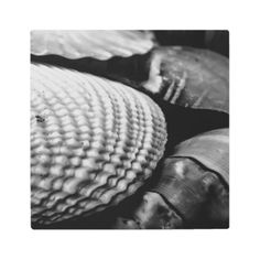Black and White Shells Metal Print - photography gifts diy custom unique special
