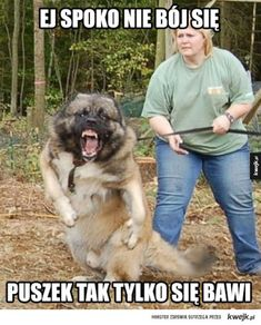 This is why I don't like big dogs.but he is quite cute when he isn't eating children, Caucasian Mountain Dog. Big Dogs, Cute Dogs, Russian Bear Dog, Caucasian Shepherd Dog, Dog Thoughts, Scary Dogs, Cutest Dog Ever, Therapy Dogs, English Mastiff