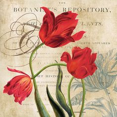 Botanist's Repository, Art Print by Carol Robinson Canvas Artwork, Canvas Prints, Poster Prints, Framed Prints, Decoupage Paper, Cool Posters, Botanical Art, Vintage Cards, Vintage Flowers