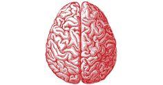 http://revistagalileu.globo.com/Ciencia/noticia/2016/02/cientistas-descobrem-causa-da-formacao-das-rugas-do-cerebro.htm
